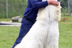 1347558007_polar-bear04