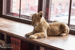 Король лев. Львенок Нала - 4