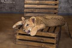 Король лев. Львенок Нала - 6