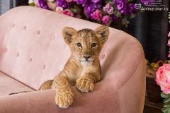 Король лев. Львенок Нала - 7