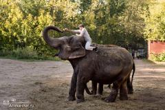 Слоны  Магда и Дженни Сергея Гулевича