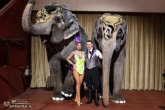 Слоны в Казани